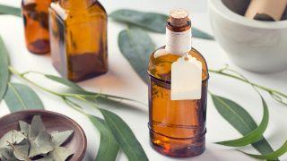 Los 5 artículos de salud más leídos en 2020 - Eucalipto, planta medicinal para resfriados y problemas respiratorios