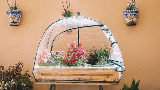 3 formas de proteger las plantas del frío y las heladas