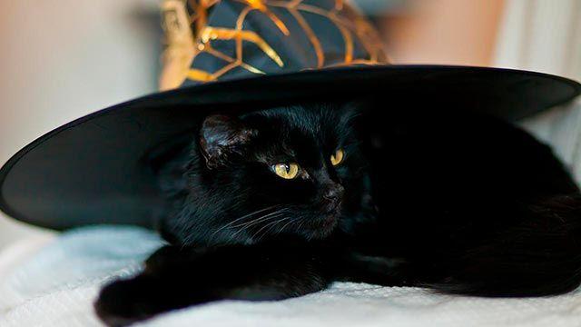 Gato negro con sombrero de bruja