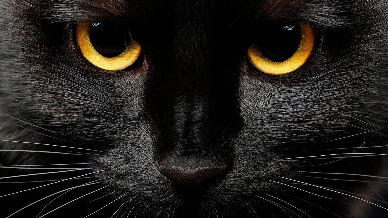 Mirada de gato negro