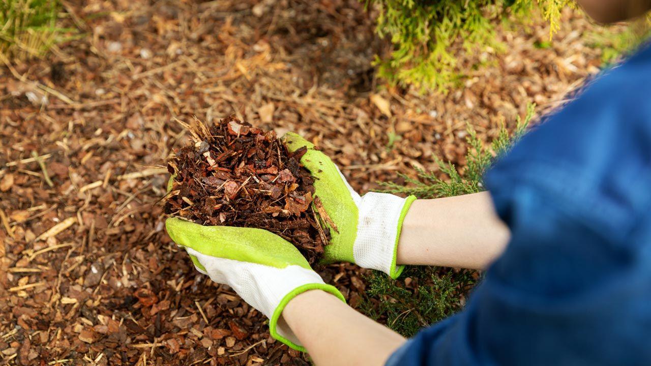Acolchado de plantas o mulching