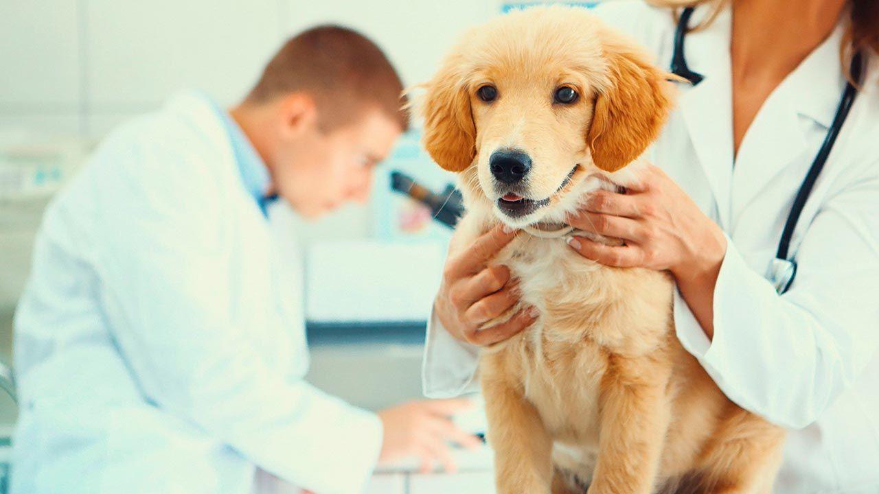 Perra en el veterinario
