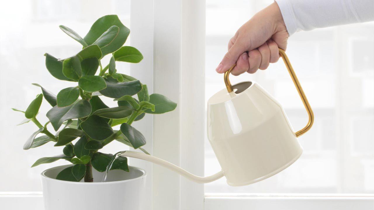regaderas de diseño perfectas para tu hogar