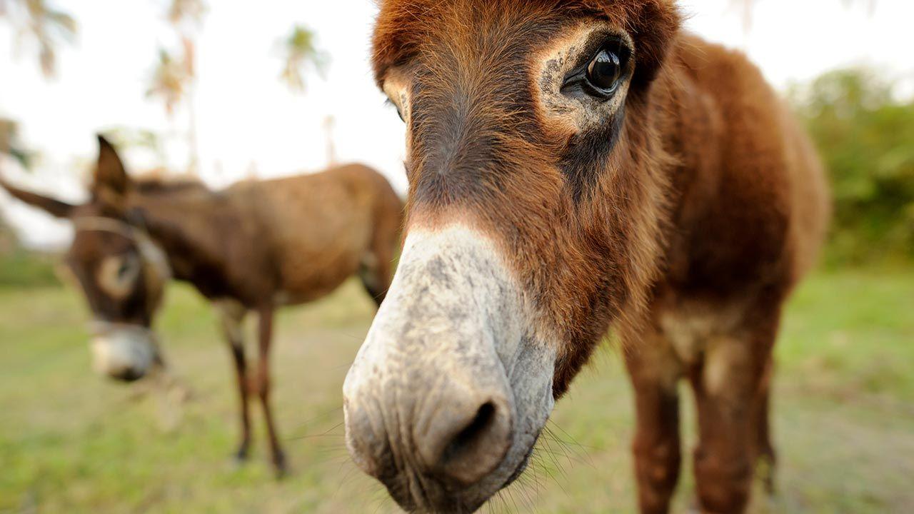 Selfie burro