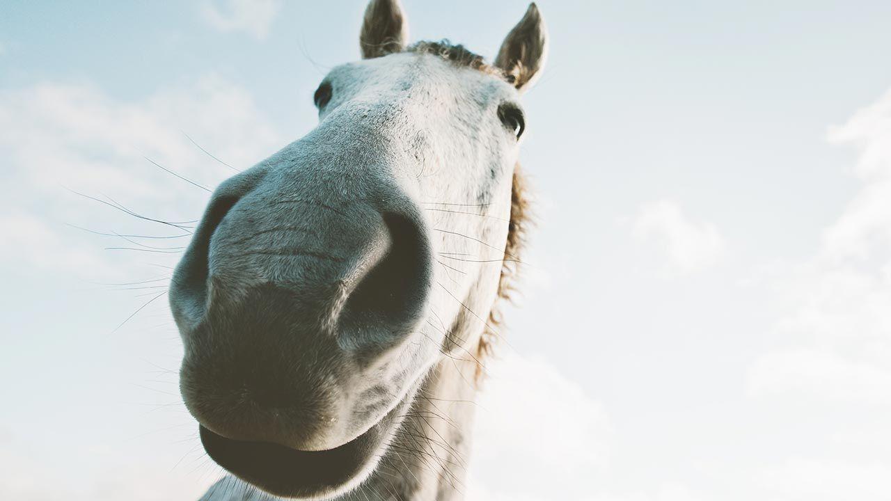 Selfie caballo