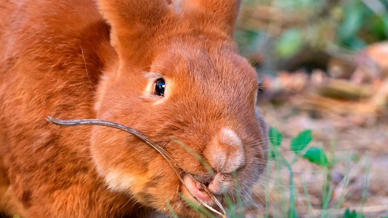 Selfie conejo