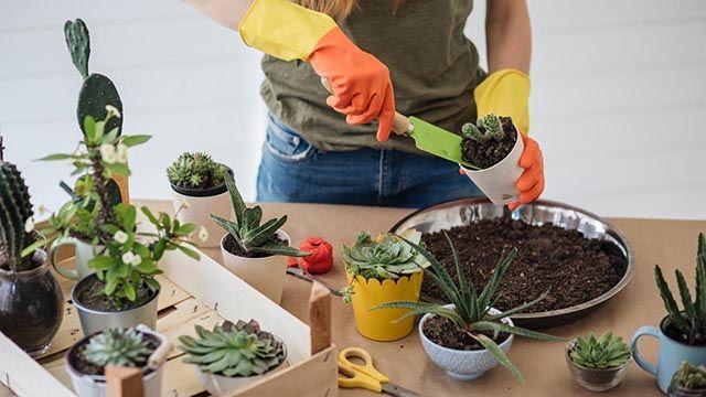 Maceta del cactus