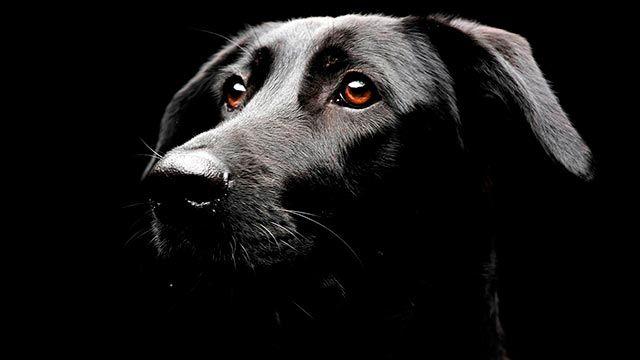 Perro observando en la oscuridad