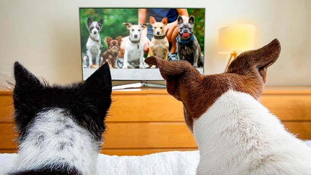 Perros viendo la televisión