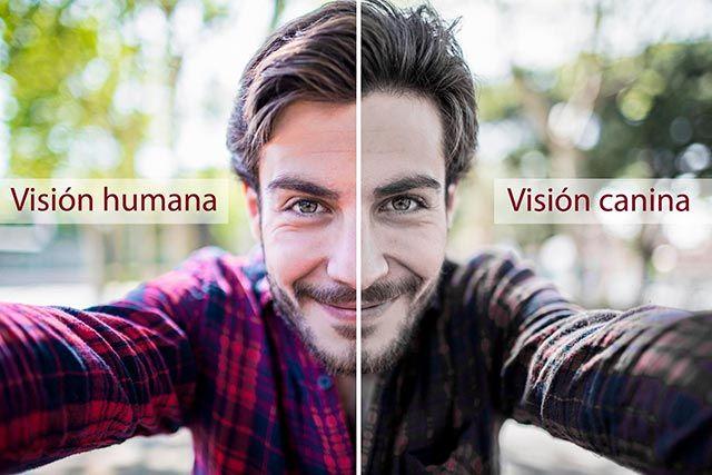 Diferencia de la visión humana a la visión canina