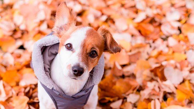 Imagen otoñal con un perro abrigado