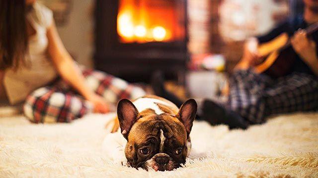 Perro acostado en la alfombra del hogar