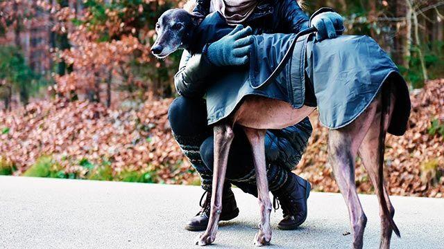 Perro con chubasquero abrazado a su dueña