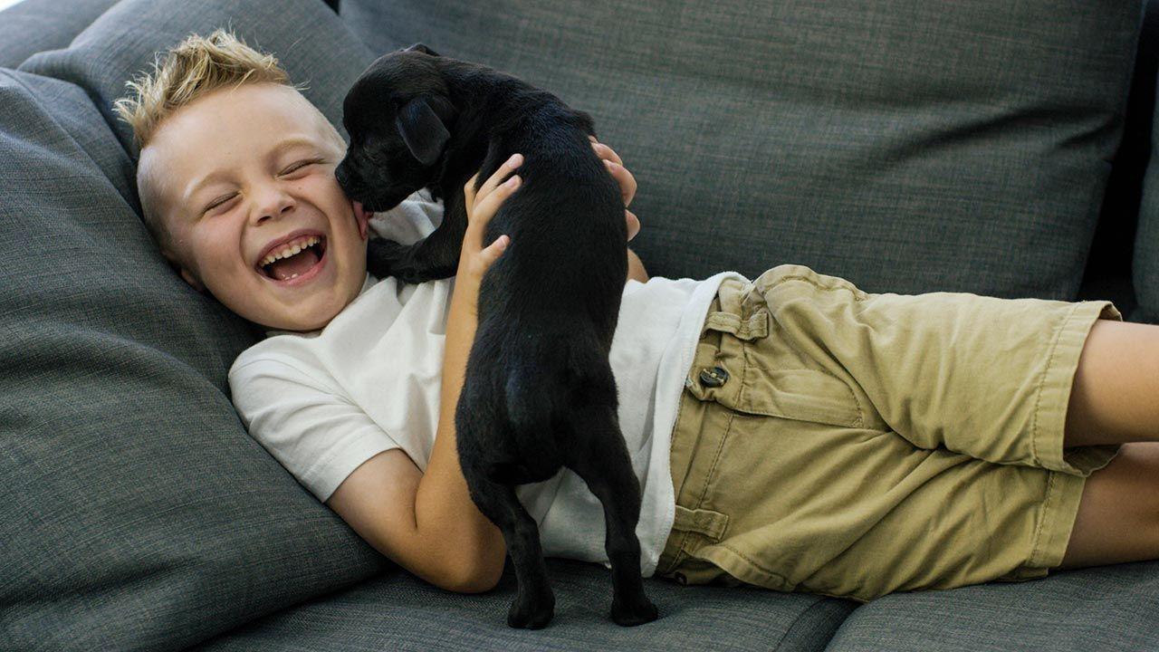 Niño y perro cachorro tumbados en el sofá