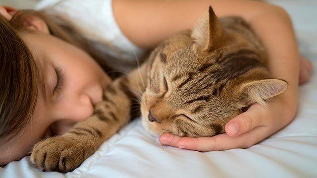 Niña durmiendo junto a su gato