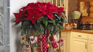 Calendario de adviento con flor de pascua