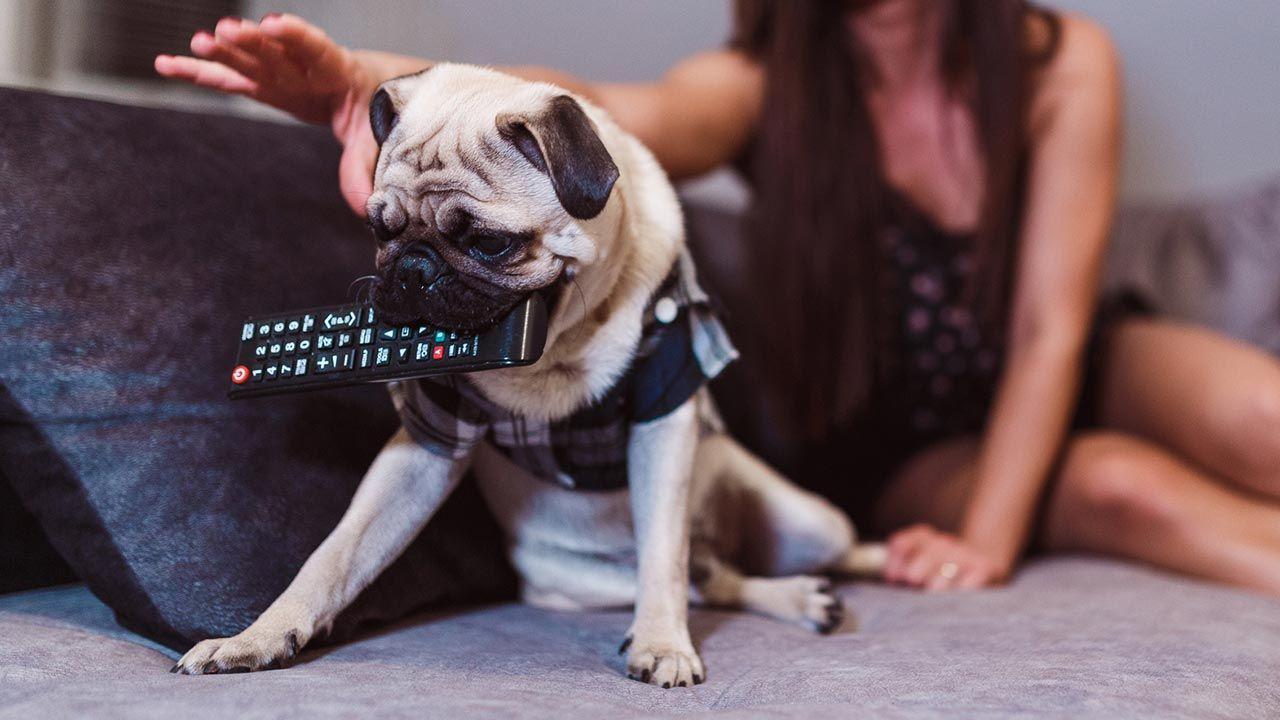 Perro con el mando a distancia en la boca