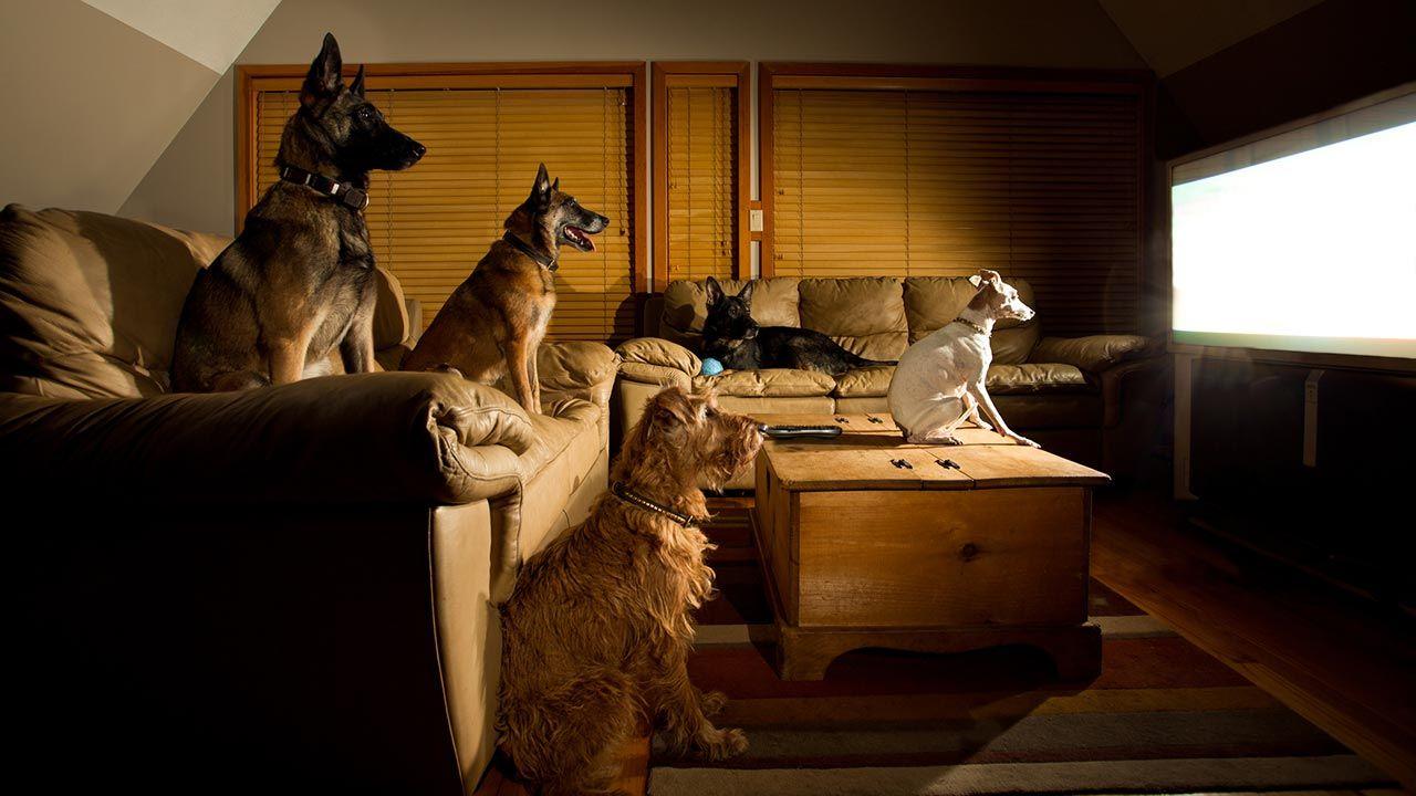 Varios perros viendo la televisión