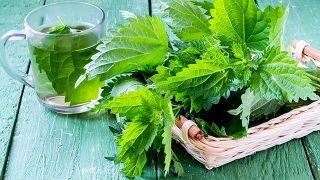 10 plantas medicinales imprescindibles en tu hogar - Ortiga