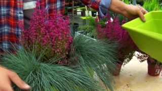 Composiciones florales con brezo y gramíneas