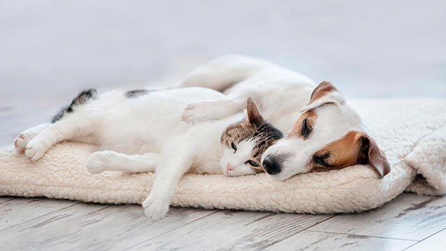 Gato y perro durmiendo en su cama