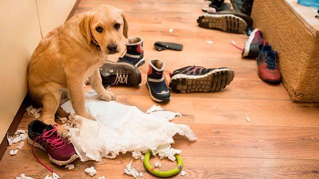 Perro junto al desorden y desastre de la casa