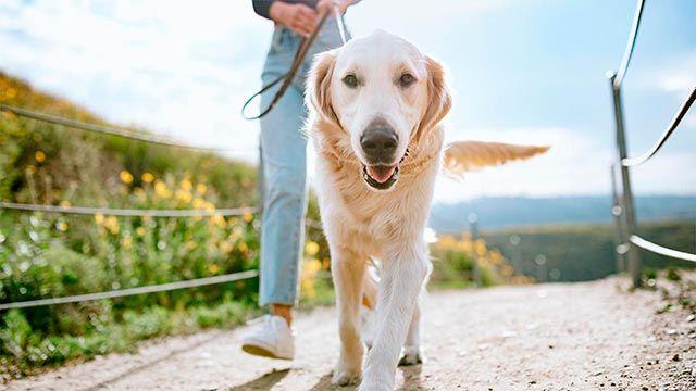 Perro dando un largo paseo