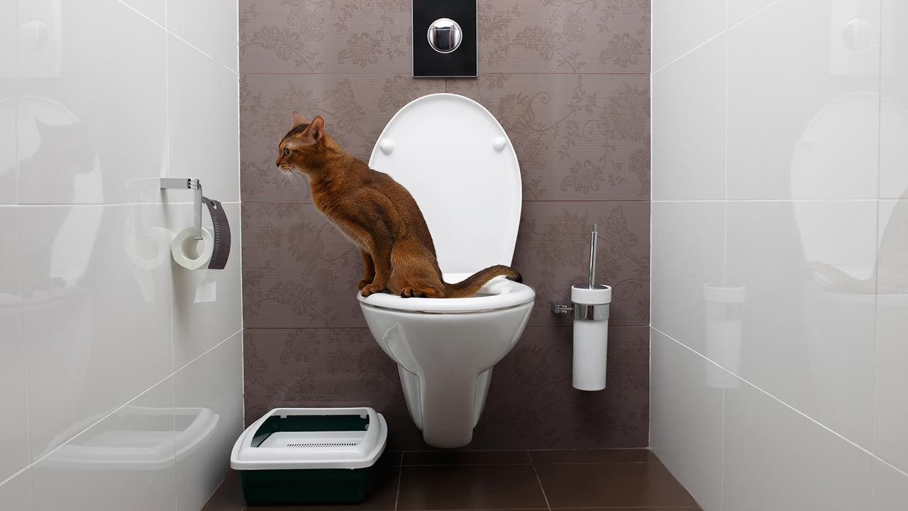 Gato usando el WC