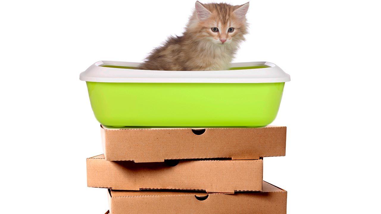 Arenero de gato sobre cajas
