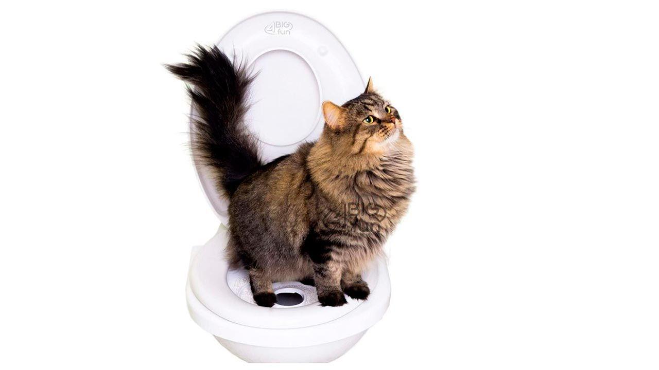 Gato sobre el adaptador de inodoro