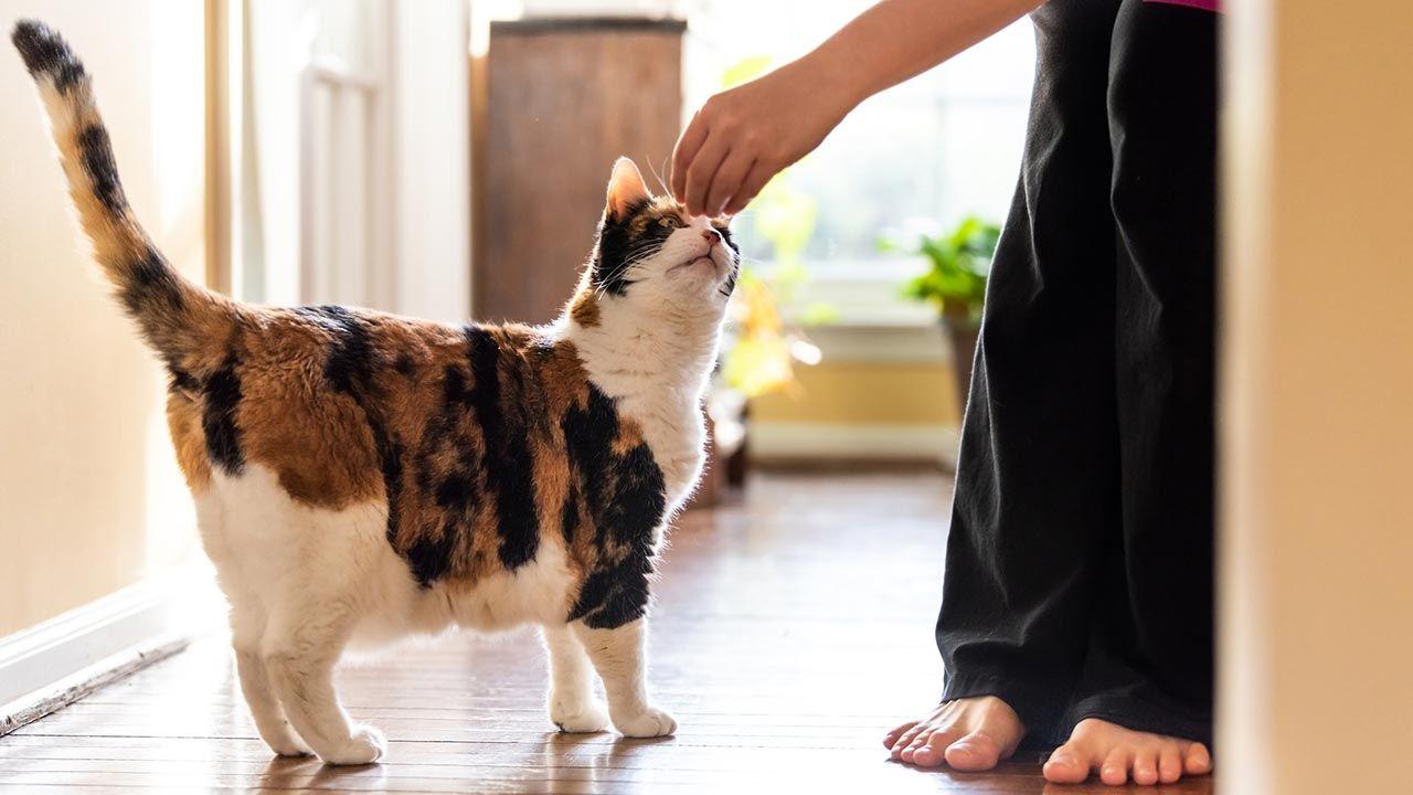 Gato recogiendo su recompensa