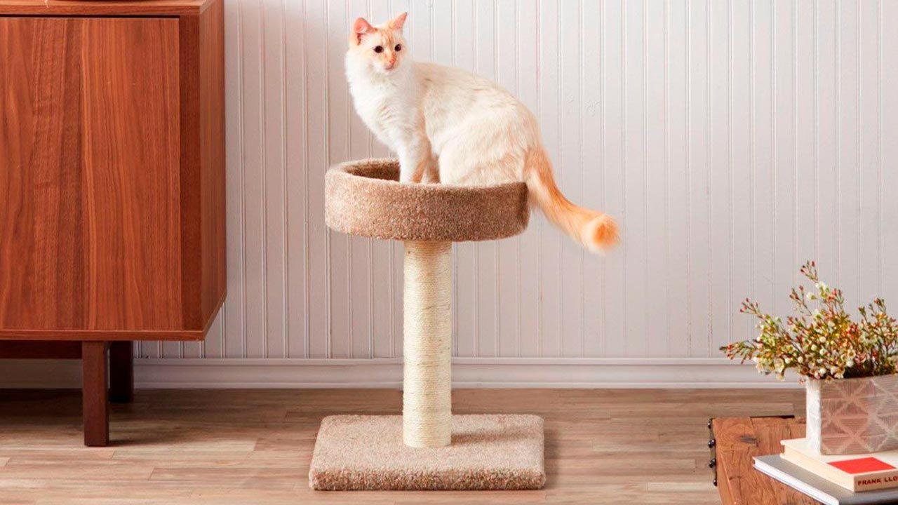 Gato sentado sobre su rascador