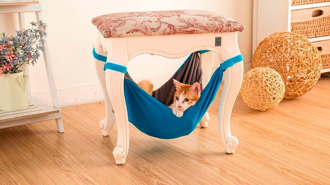 Gato tumbado en su hamaca