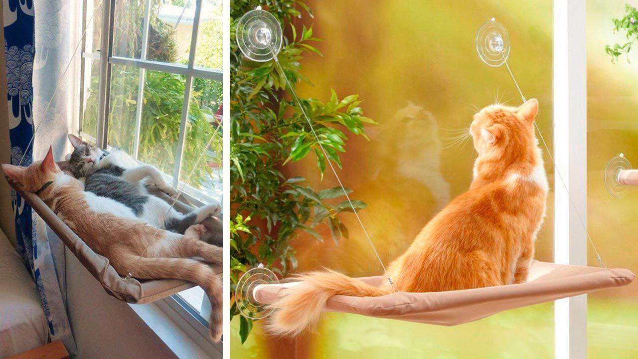 Gatos durmiendo sobre su hamaca colgada en la ventana