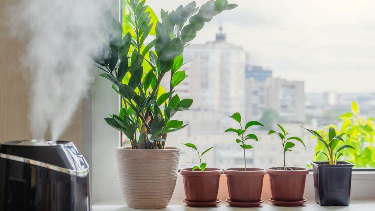 Claves para el mantenimiento de las plantas de interior en otoño