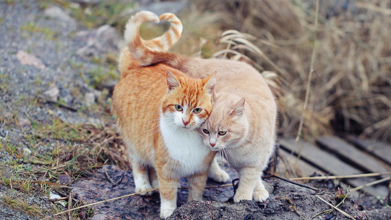 Dos gatos callejeros acurrucándose