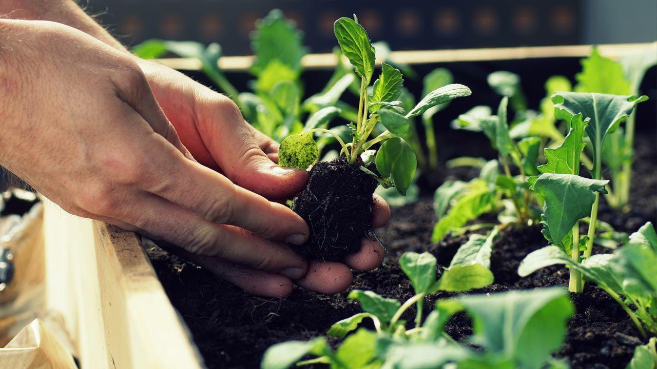 Cómo sembrar, trasplantar y cosechar en tu huerto urbano
