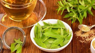 Verbena, planta medicinal - Infusión