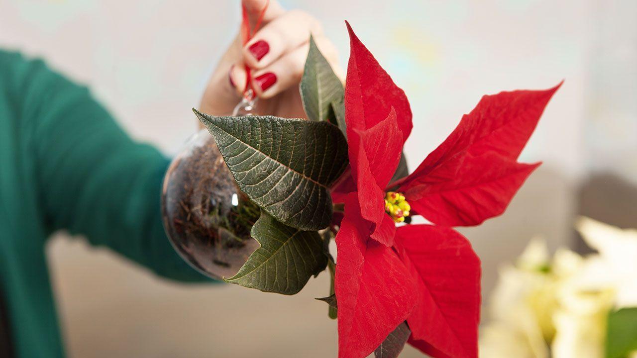 Bolas de navidad con mini poisettias