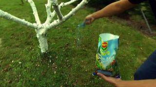 Cómo encalar los troncos de los árboles