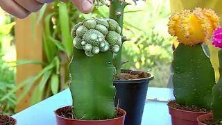 Plantas pequeñas para vestir la mesa