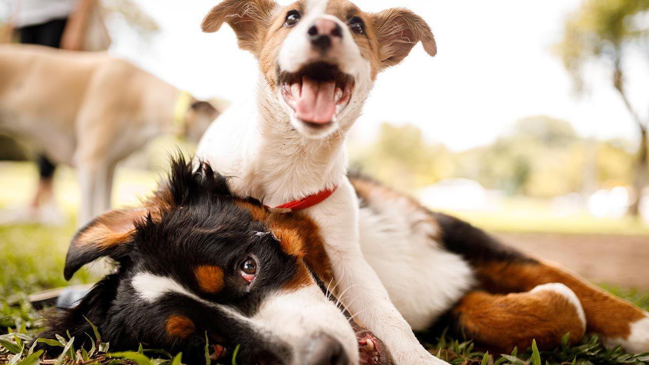 Cachorro jugando con un perro adulto