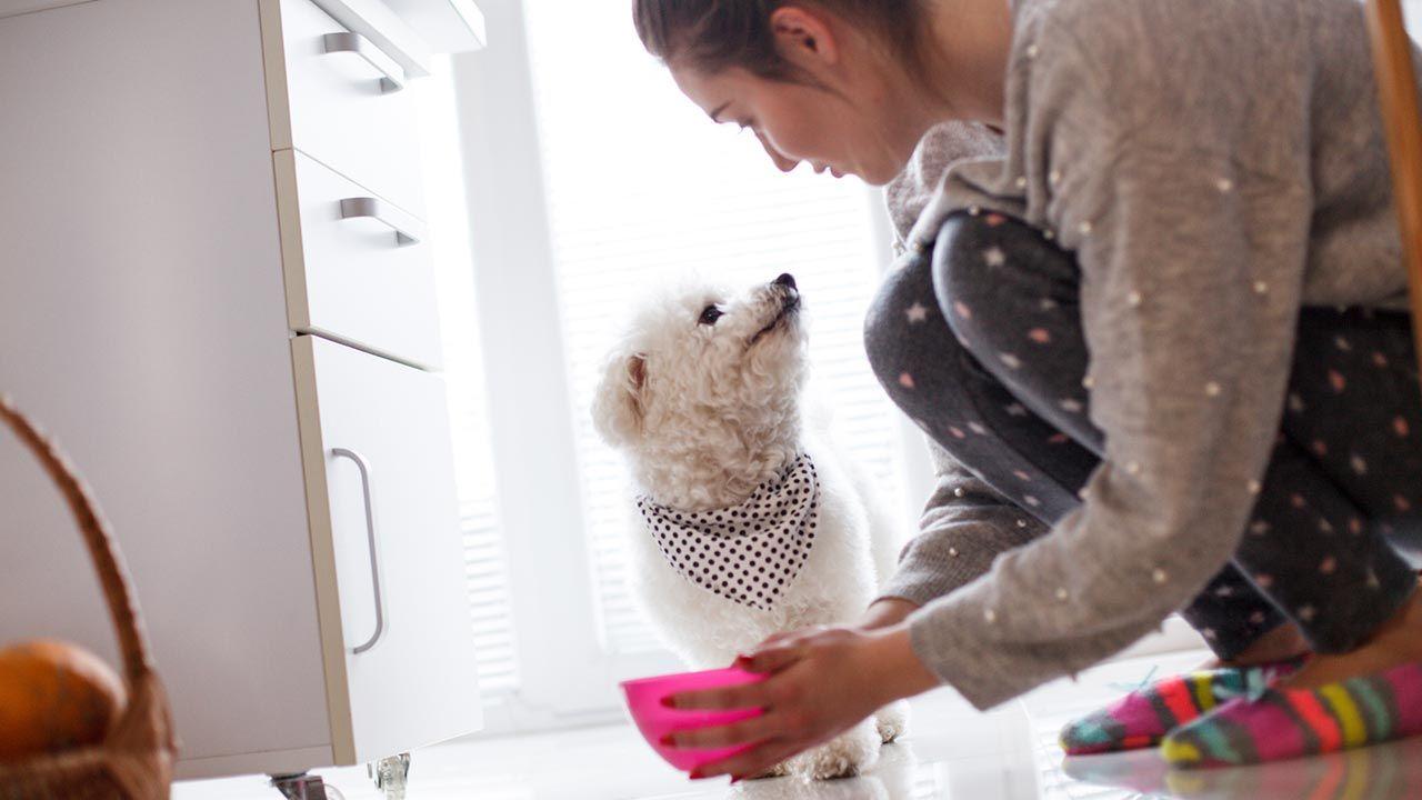 Chica ofreciendo la comida a su perro
