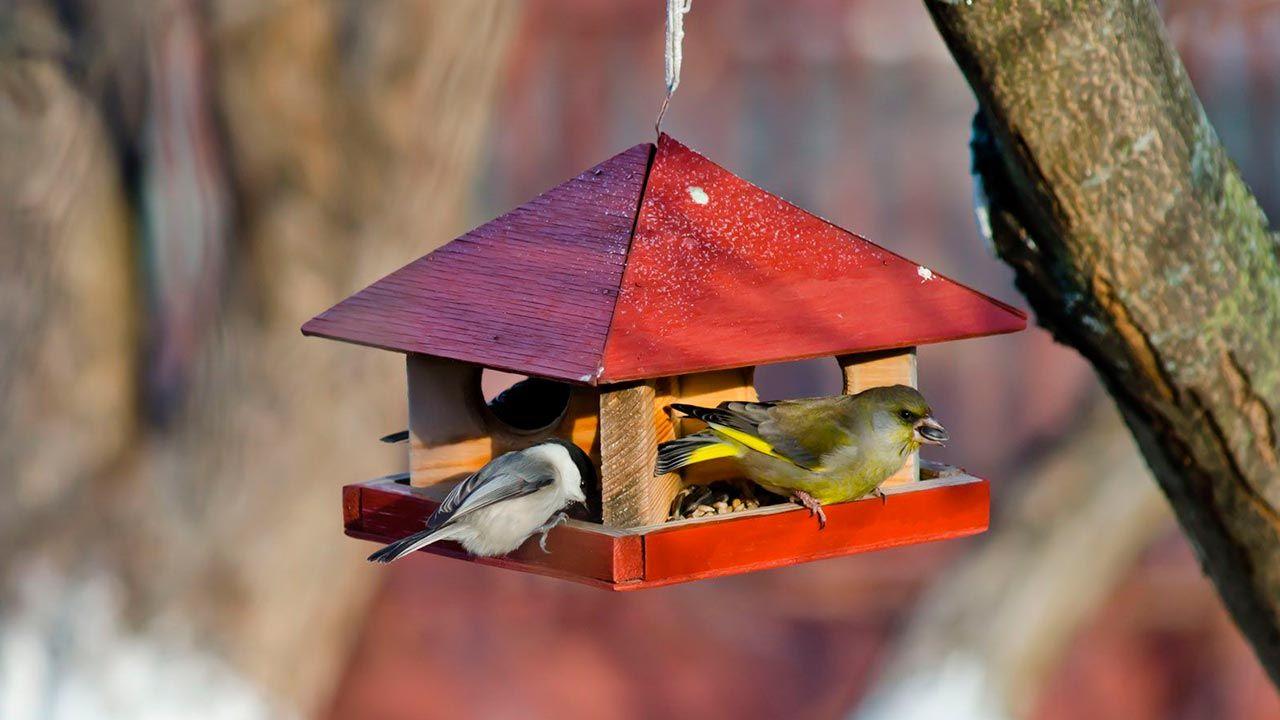 Comedero Tolva con forma de casita (para pájaros)