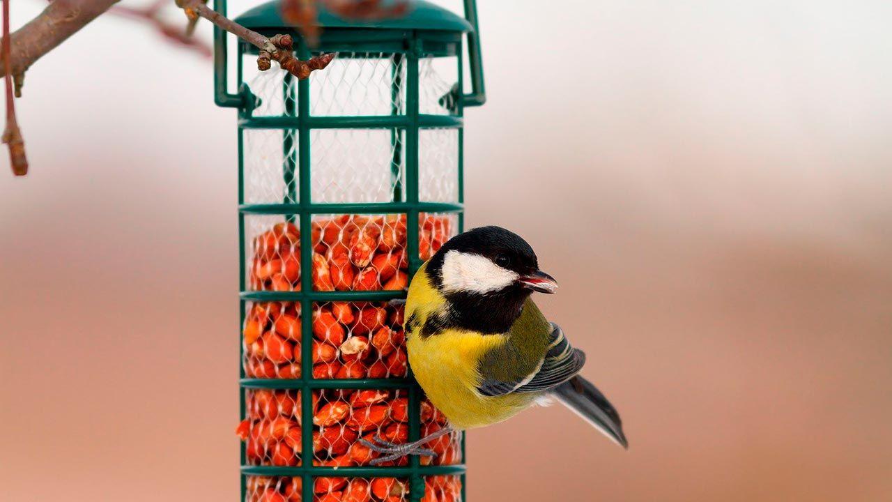 Comedero-semilleros para pájaros