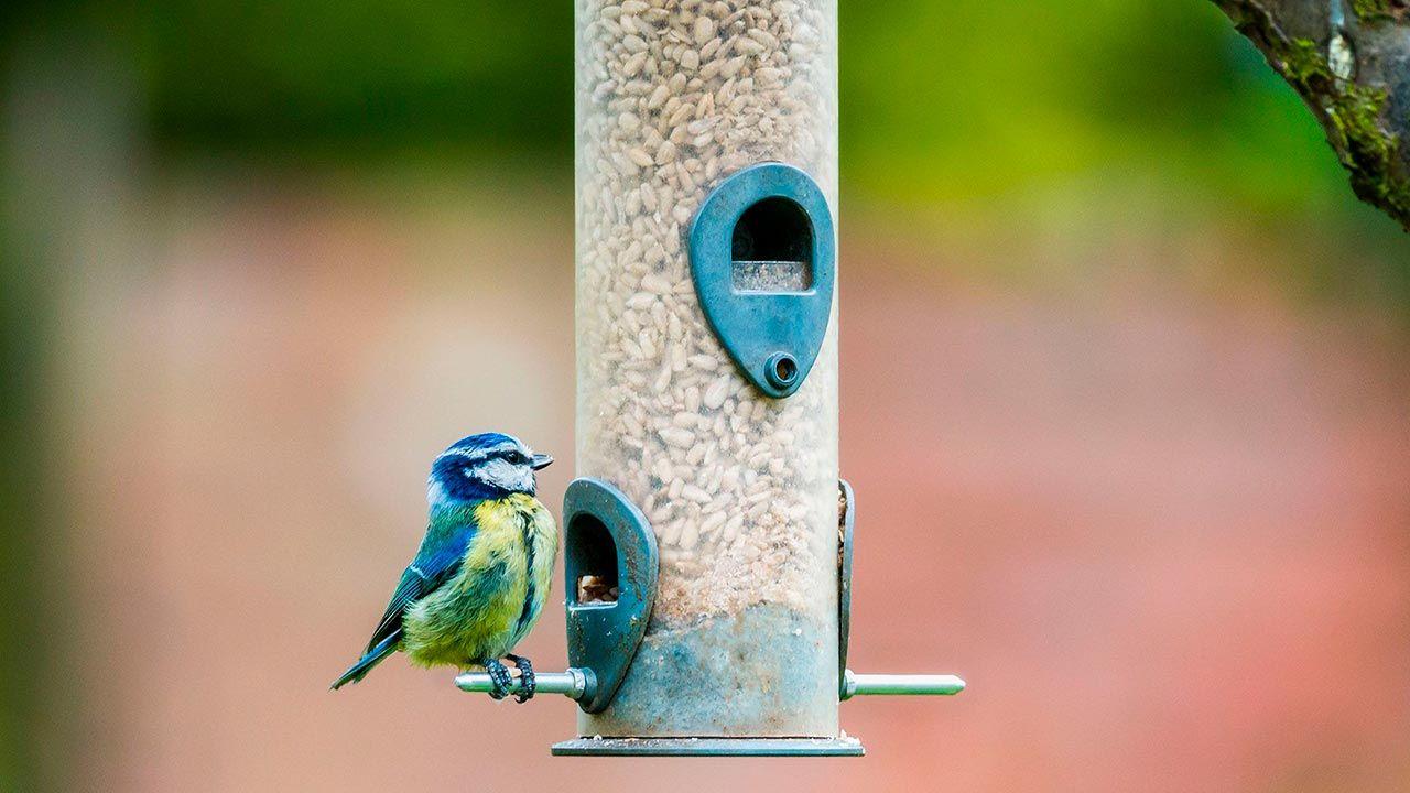 Dispensador de comida para pájaros