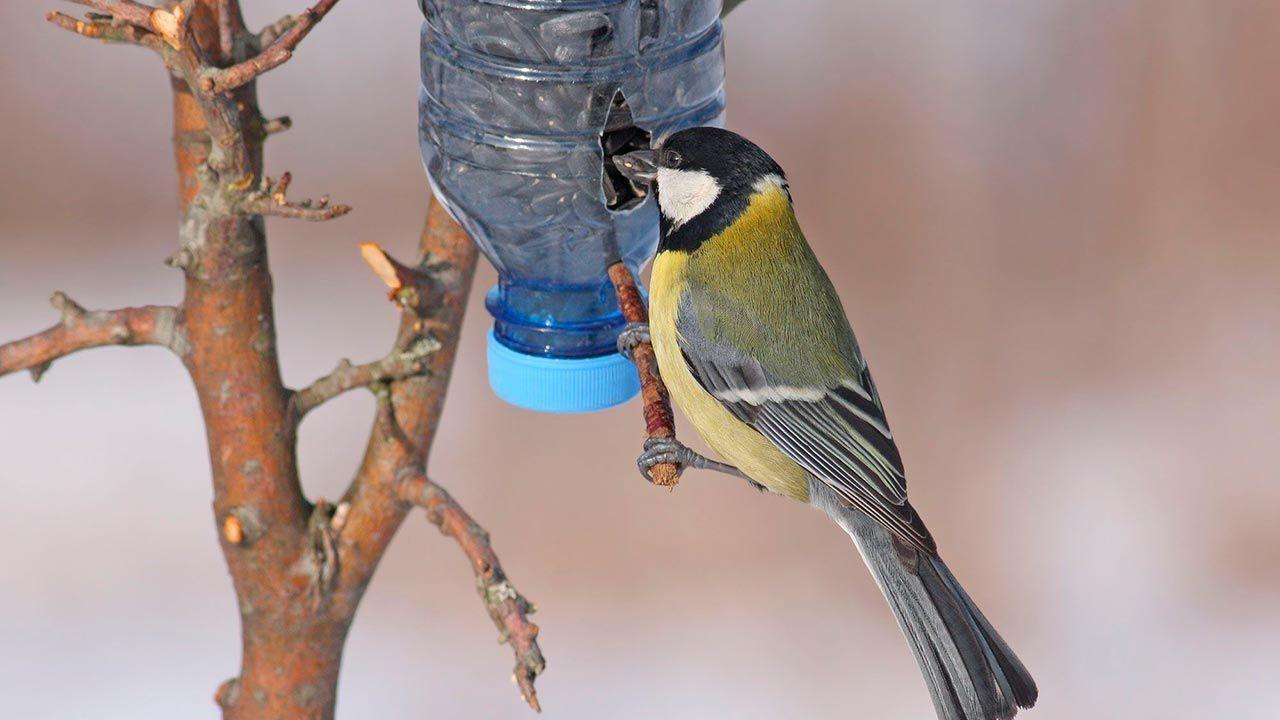Comederos caseros para pájaros