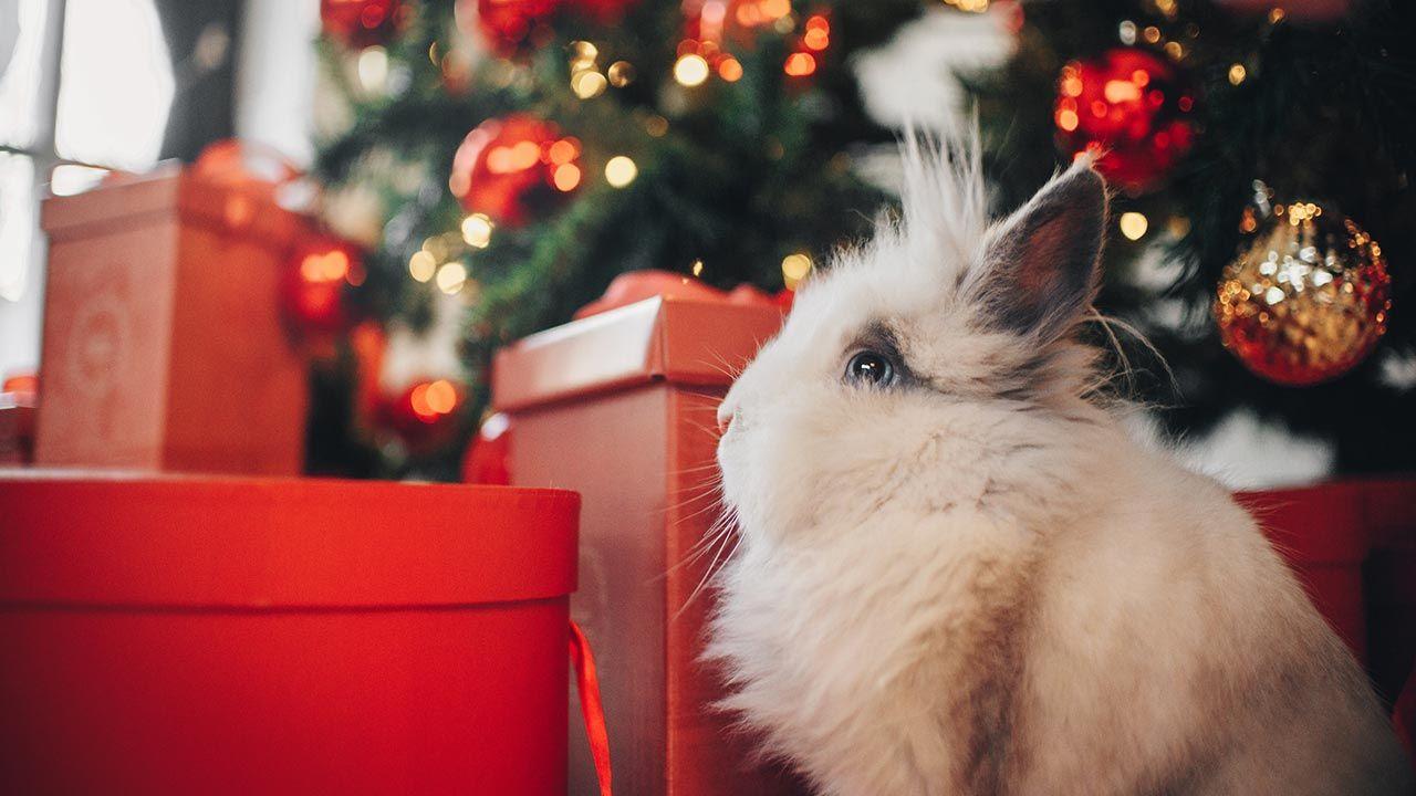 Conejo sentado al lado de regalos de Navidad