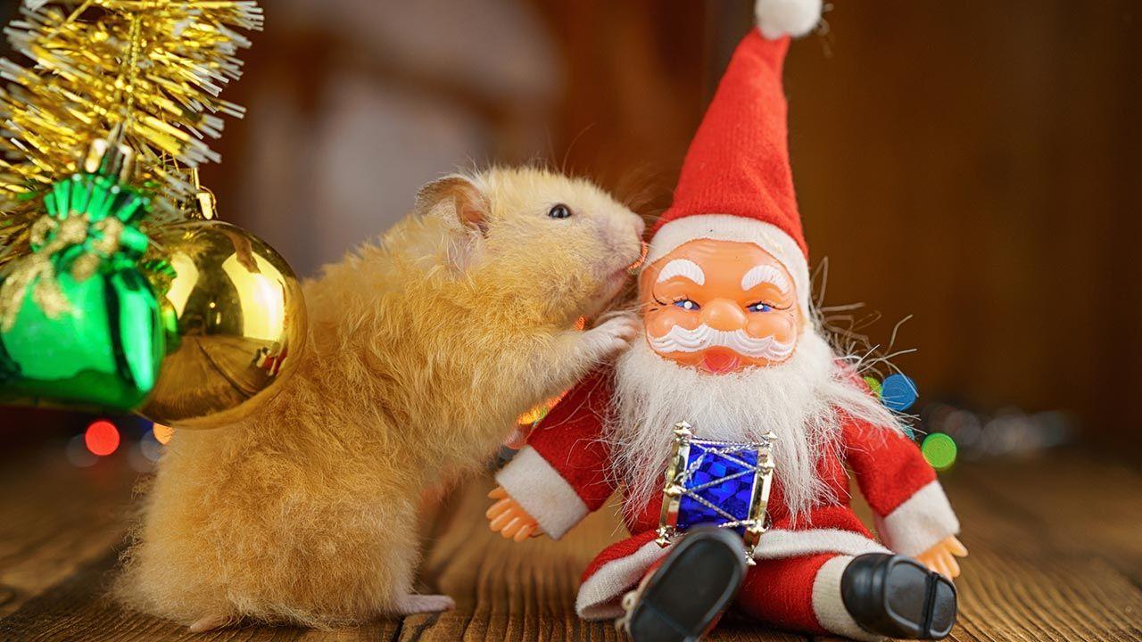 Hámster jugando con un muñeco de Papá Noel