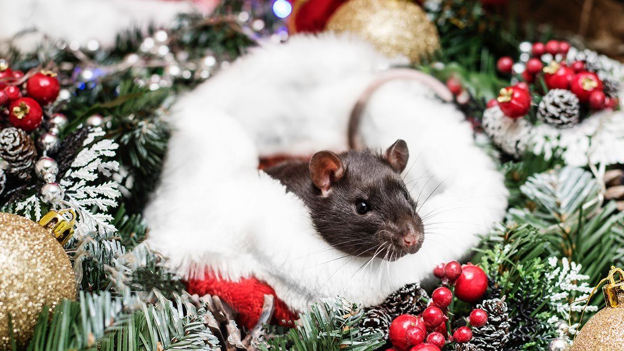 Hásmter escondido entre adornos navideños